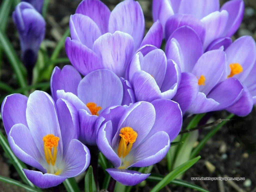 8 марта поздравления к празднику